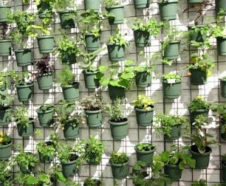 plantas na parede