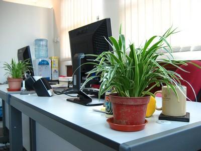 plantas no escritório
