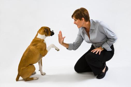 treinador de cães